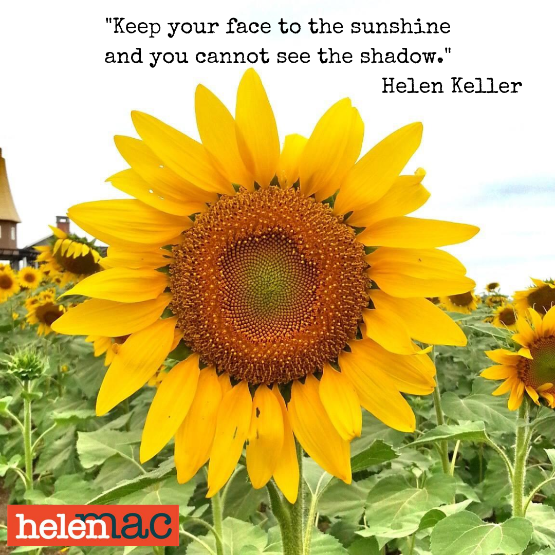 Sunflower with Helen Keller quote