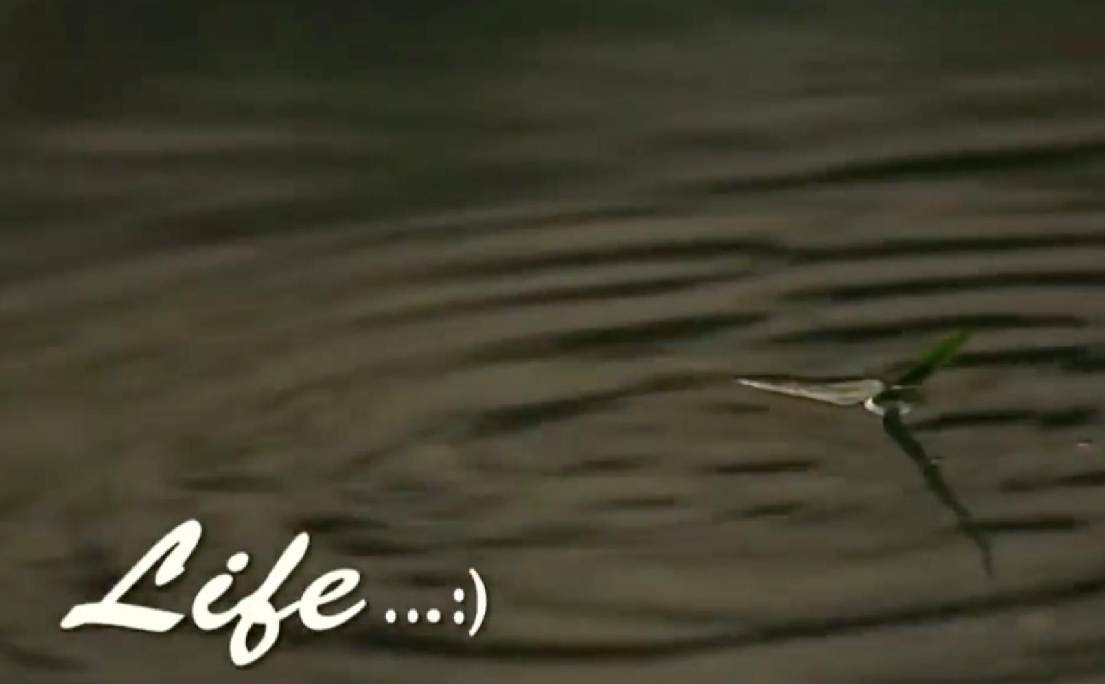 Screenshot from movie