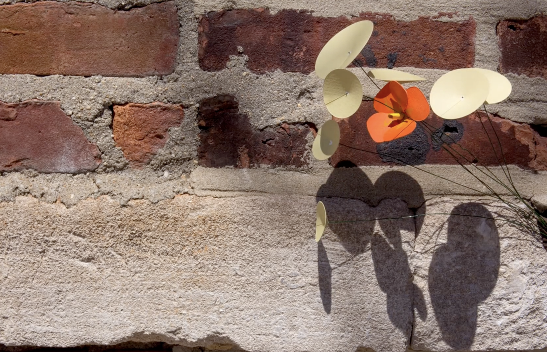 Flower growing on a wall - resilience